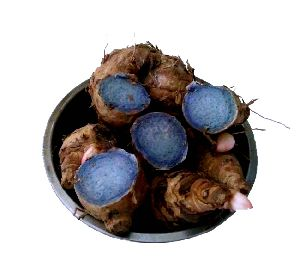Black Turmeric (curcuma Caesia)