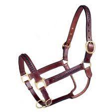Brown Horse Halter