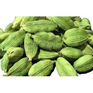 Indian Green Elaichi