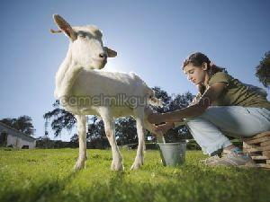 Natural Goat Milk