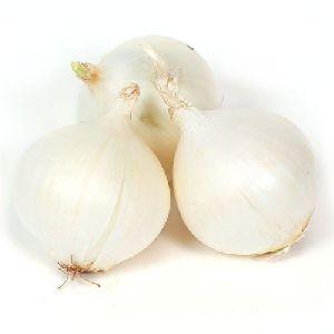 Indian White Onion