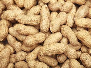 grount nut