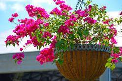 Multicolor Hanging Basket
