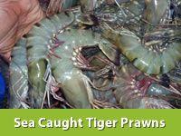 Sea Caught Tiger Prawns