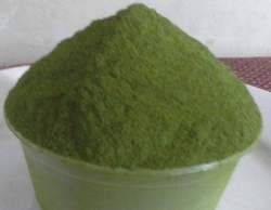 Extract Moringa Powder