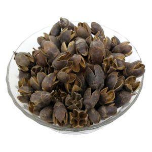 Dry Natural Raw Plant Material Bakuli For Decoration Potpourri