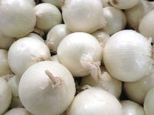 Fresh White Onion