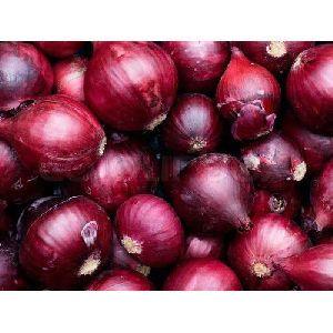 Fresh Pure Onion