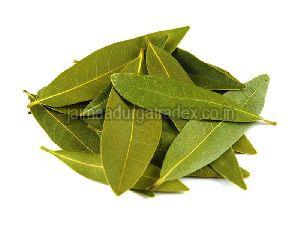 Fresh Bay Leaf