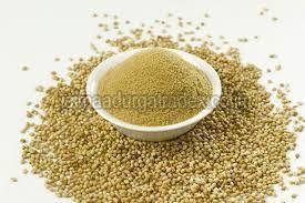 Fresh Coriander Powder