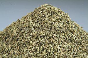 Fresh Organic Fennel Seeds