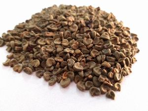Ambrette Seed - Abelmoschus Moschatus