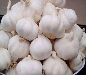 Fresh Whole Garlic
