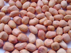 Indian Peanut Kernels