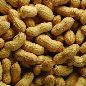 Roasted Shelled Peanuts