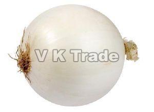 Fresh Big White Onion