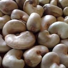 Premium Grade Raw Cashew Nuts