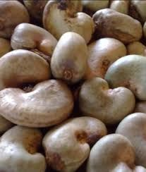Unprocessed Raw Cashew Nuts
