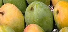 Organic Indian Mango Fruit