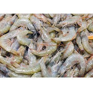 White Vannamei Shrimp