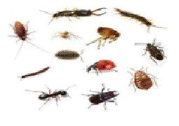 Crawling Insects Pest Control Services