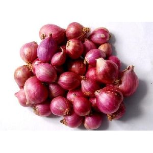 Onions in Karnataka - Manufacturers and Suppliers India