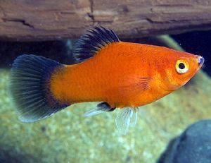 Live Aquarium Fish