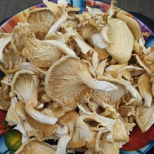 Oyster Mushroom in West Bengal - Manufacturers and Suppliers India