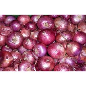 Onions in Kerala - Manufacturers and Suppliers India