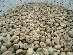 Green Coffee - Robusta Beans ( Washed )
