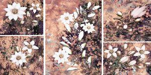 Split Floral Art