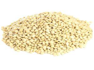 White Lentil