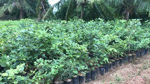 nurseries plants