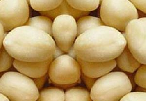 Blanched Bold Peanuts
