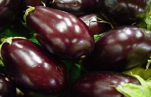 Fresh Purple Brinjal