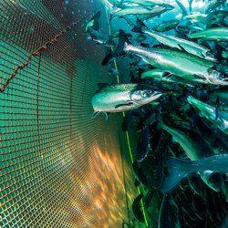 Fish Farming Net