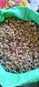 Seed Mahogany