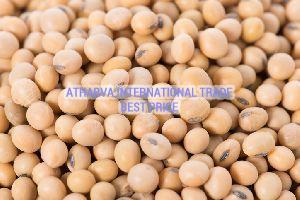 NRC 37 Soybean Seeds
