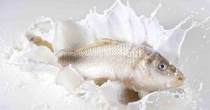 Milk White Carp Fish