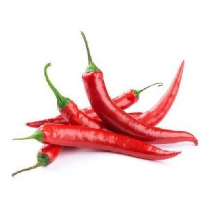 Fresh Red Chili
