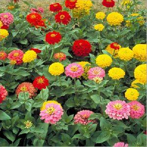 Indoor Flower Plant