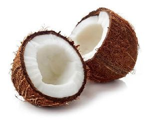Coconut by Balk by wholesale