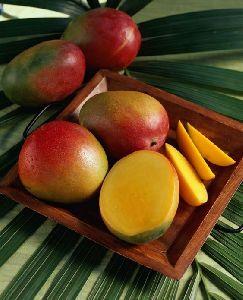 Mango/ by Balk by wholesale