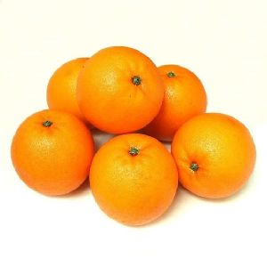 Orange/ by Balk by wholesale