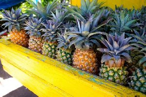 Pineapple/ by Balk by wholesale