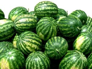 Watermelon/ by Balk by wholesale