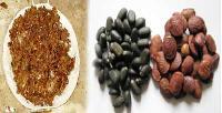Non Edible Oil Seeds
