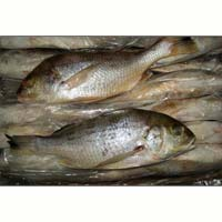 White Snapper Fish