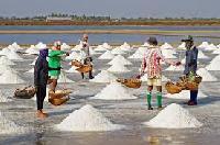 Salt ( Free Flow Iodized Salt / Crystal Salt / Industrial..