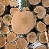 Cedar Wood Logs
